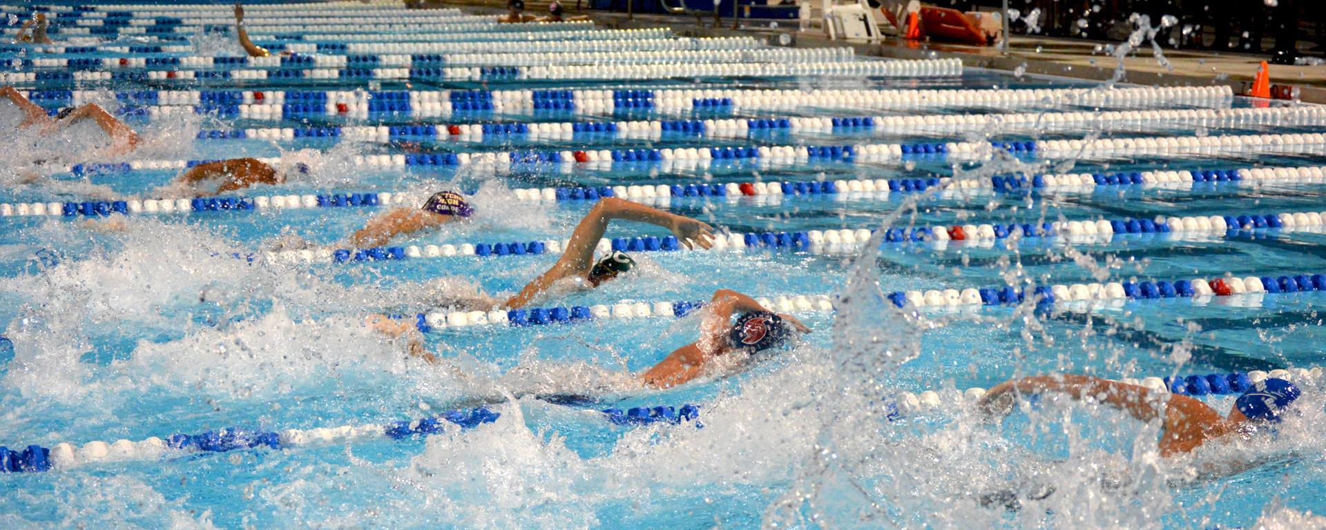 Competitive swimmers in a pool