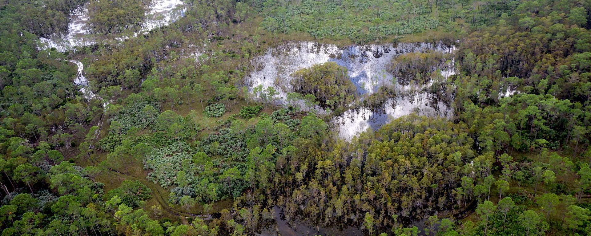 Cypress Creek Natural Area