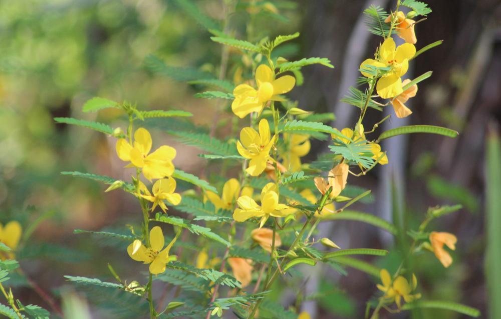 Flora & Fauna at Halpatiokee