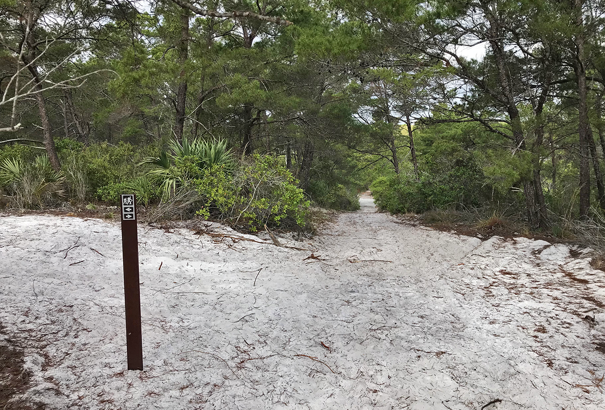 A trail at the Hobe Sound Scrub Preserve