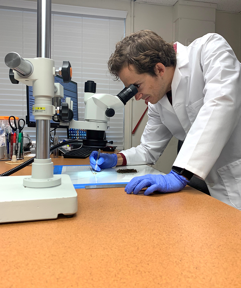 Mosquito control lab staff observing mosquito data under a microscope
