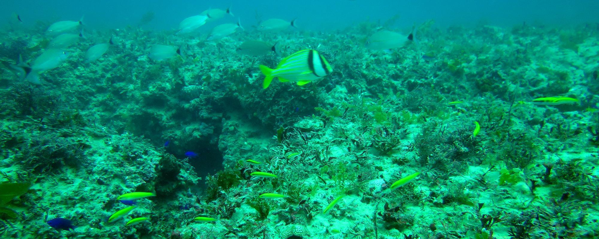 Natural Reef