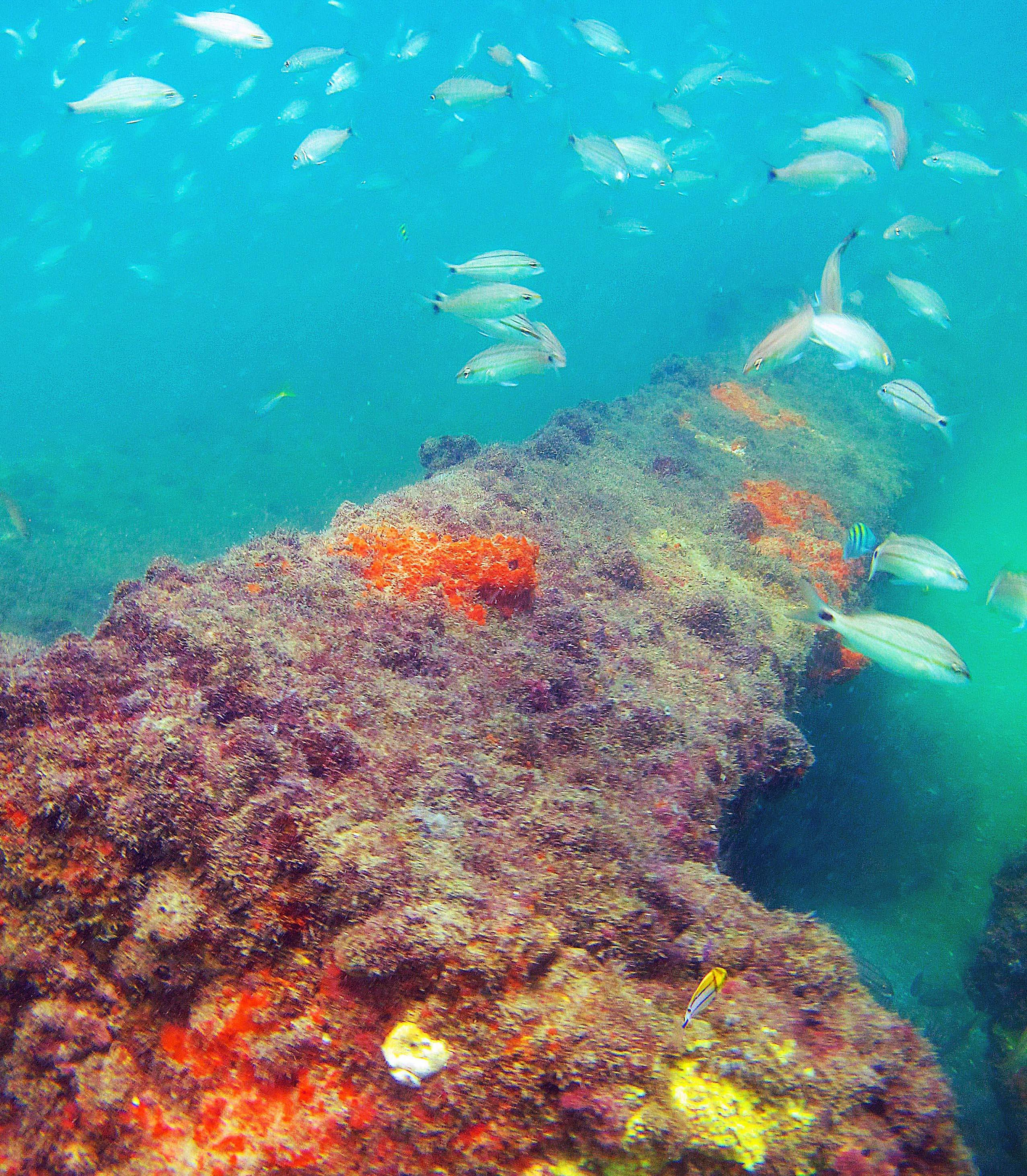 An artificial reef