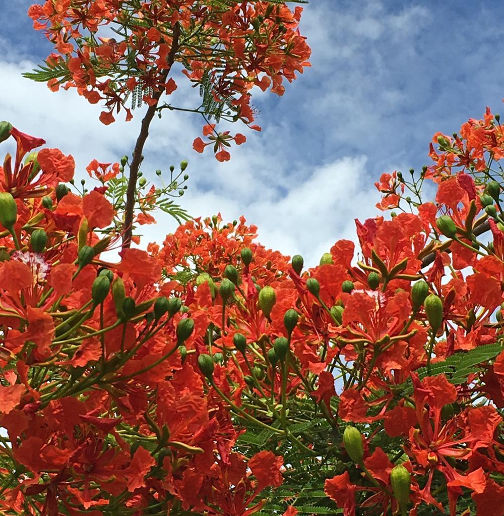 Flowers in bloom at Frances Langford Dockside Pavilion.