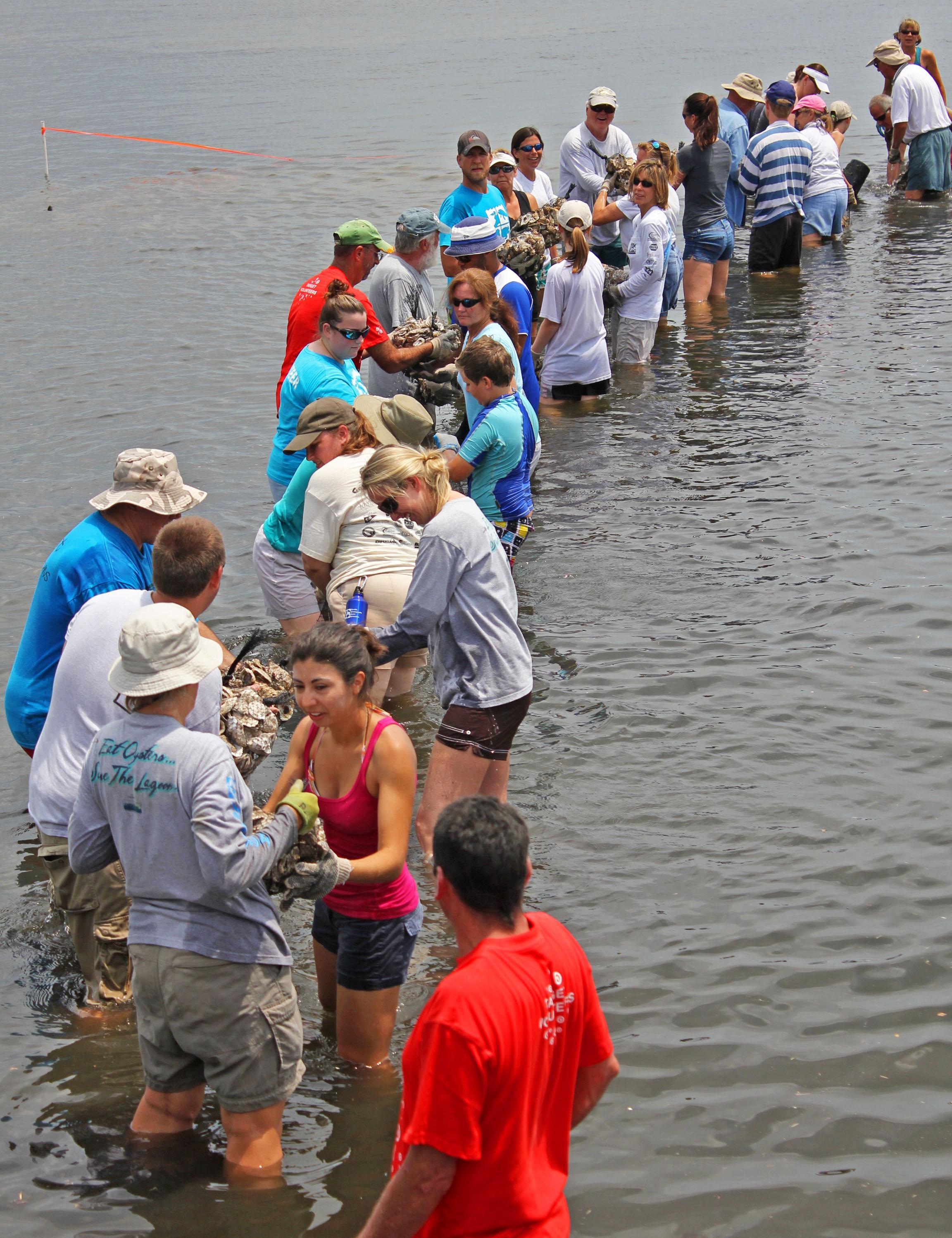 An image of volunteers placing oyster bags
