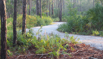 A trail at Delaplane Preserve