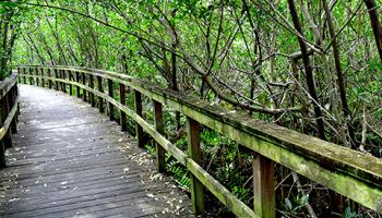 Boardwalk at Kiplinger Preserve