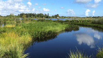 Waterways at Kitching Creek Preserve