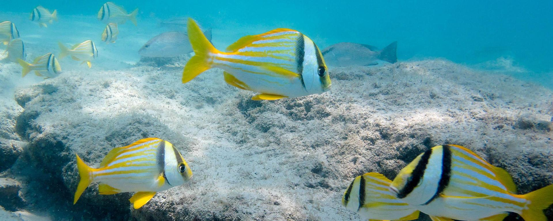 Fish inhabiting a coral reef