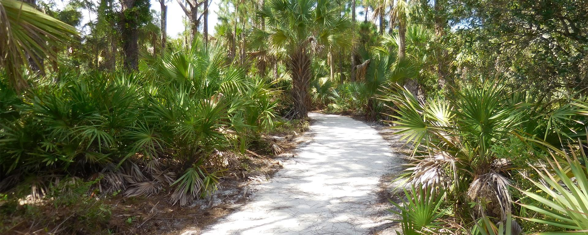 A Trail at Gomez Preserve