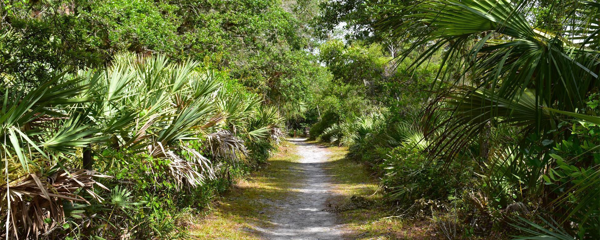 a trail at Halpatiokee Regional Park