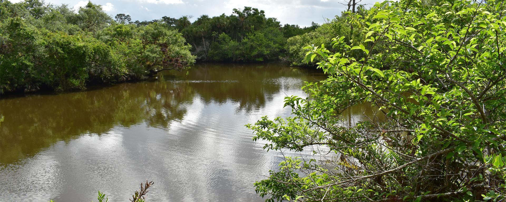 Water at Halpatiokee Regional Park