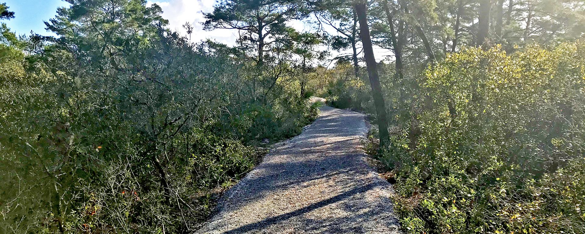 A gravel trail through the Hobe Sound Scrub Preserve