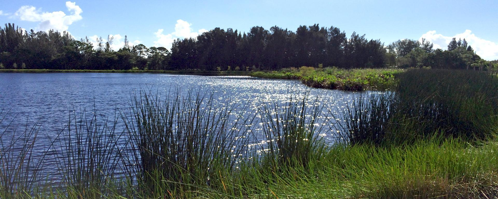 An image of Kitching Creek Preserve