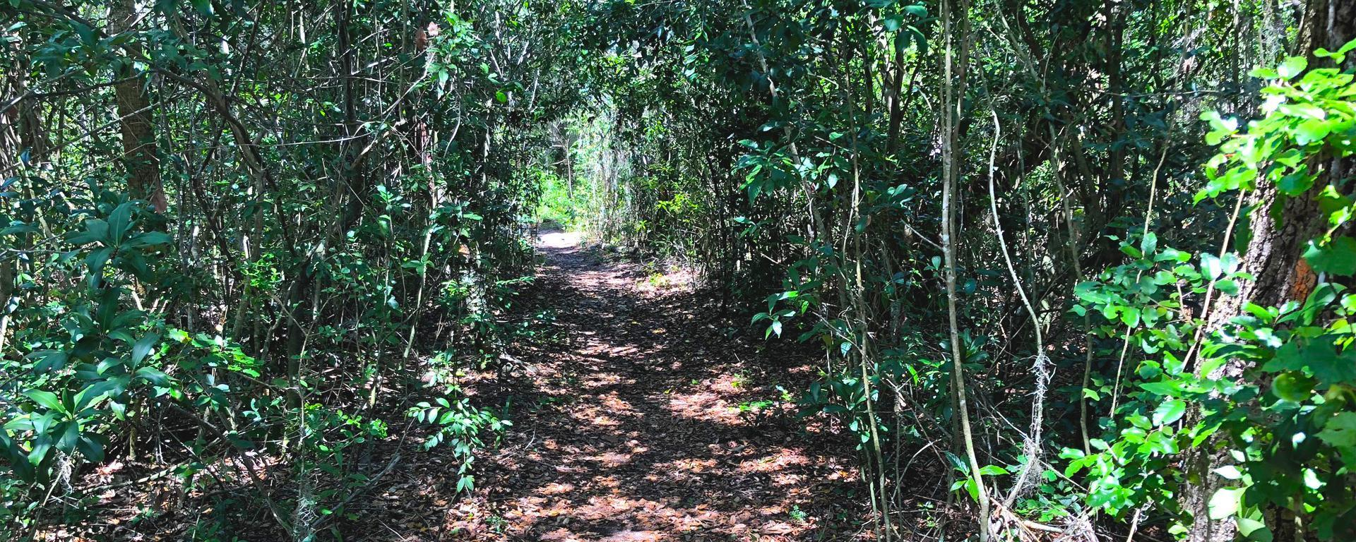 A trail at Maggy's Hammock Park