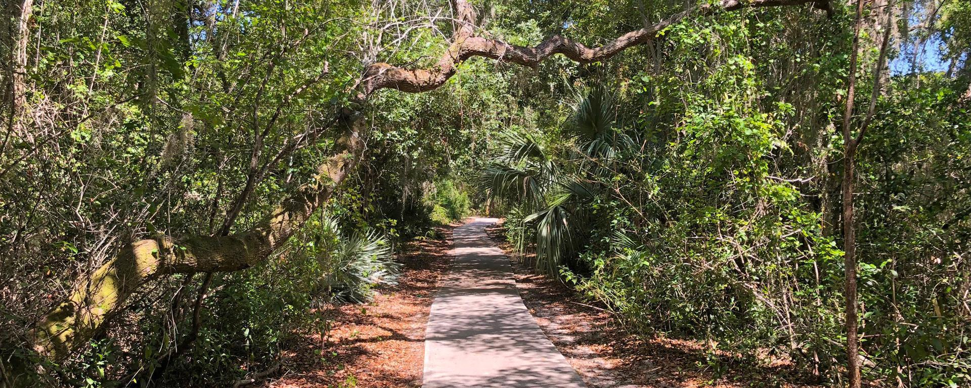 A trail in Maggy's Hammock Park