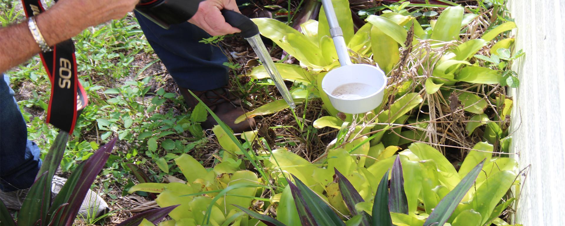 An image of Bromeliads