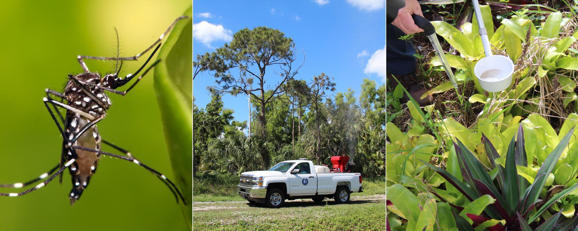 Aedes Aegypti and a Martin County Mosquito Control truck