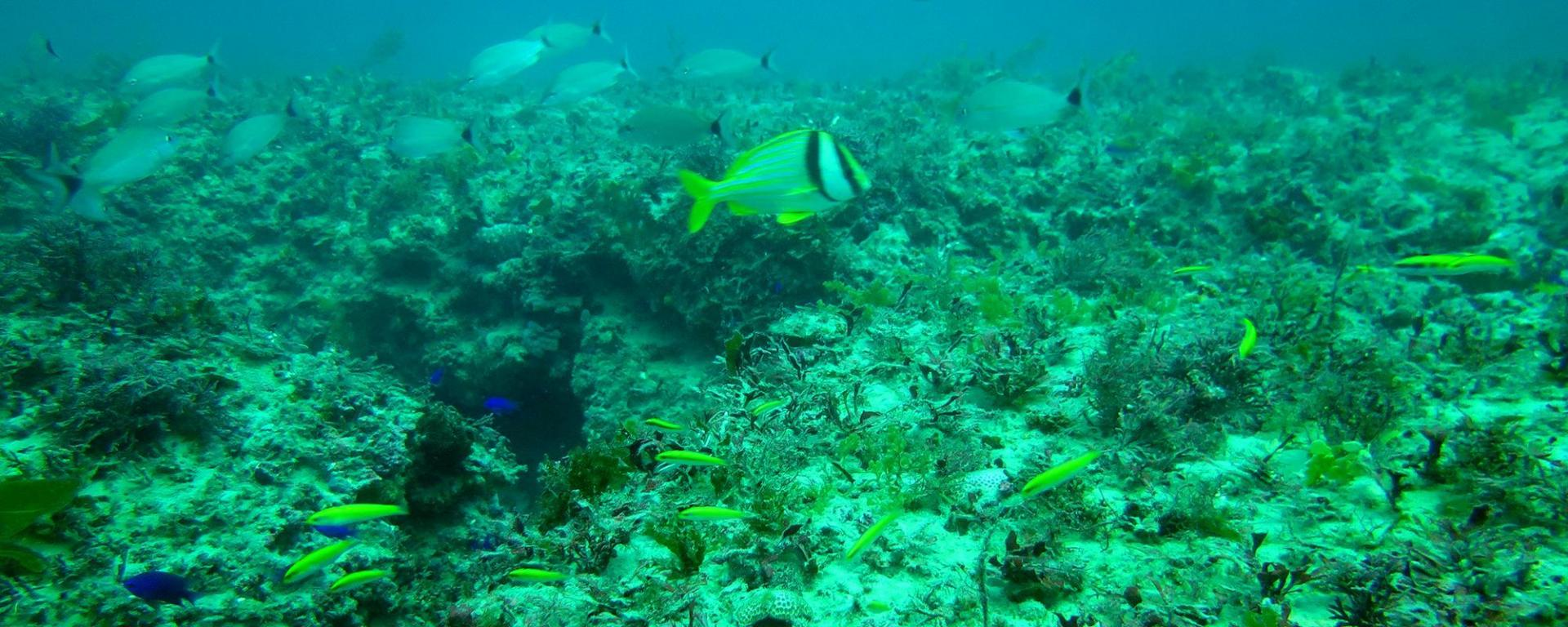 Martin County Natural Reefs