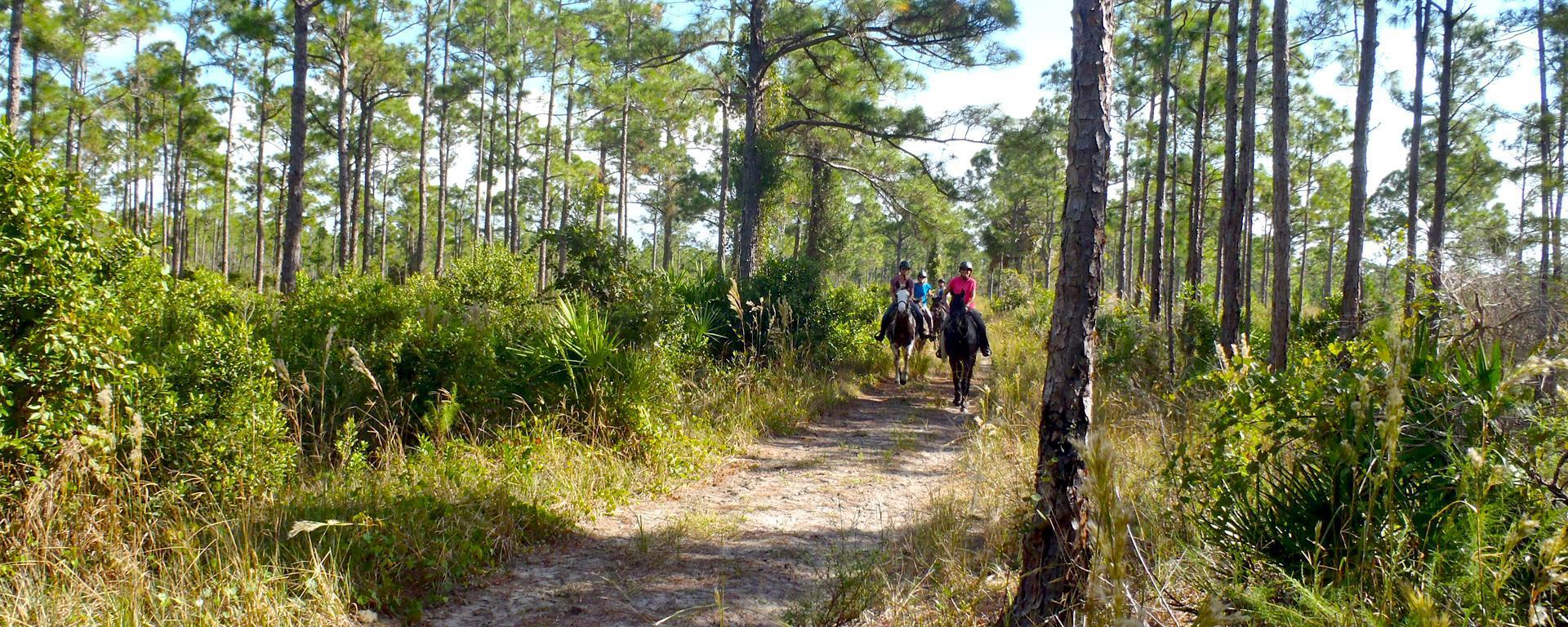 Riders on horseback along a trail at Pal Mar East