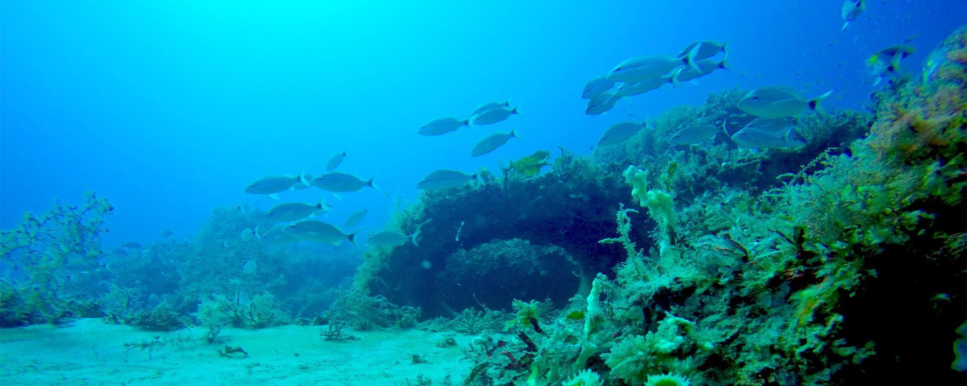 Martin County Reefs