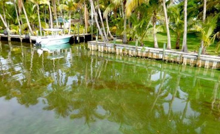 Algae shown near a residence