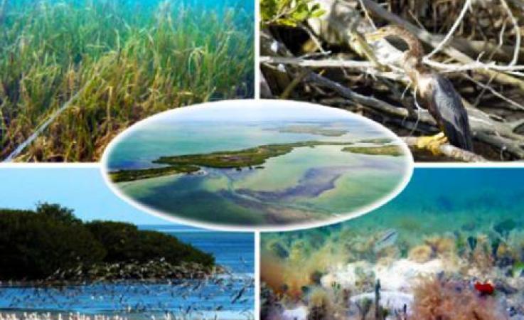 Florida bay images