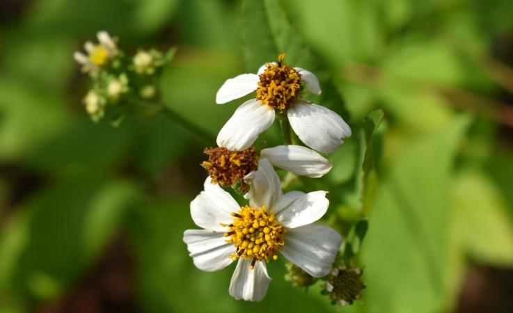 A flower at Kiplinger Preserve