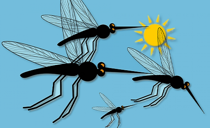 Mosquitoes flying
